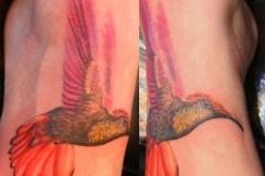 Hummingbird. Inkhaus Tattoo.